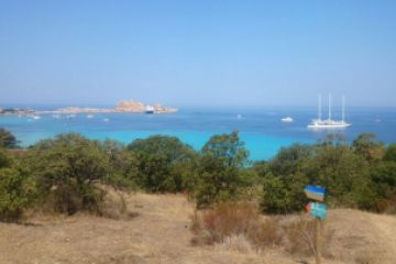 oliviers-camping-ile-rousse-corse-976